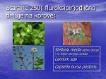 starane 250 fluroksipir odli no deluje na korove