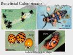 beneficial coleopterans