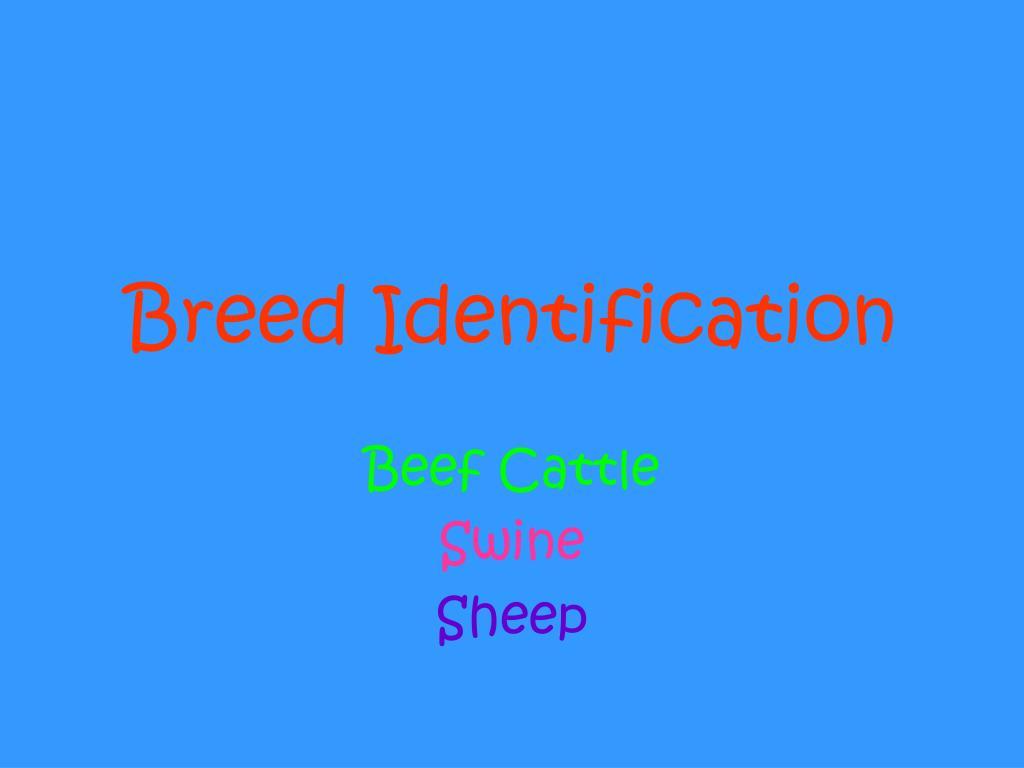 breed identification l.