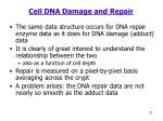 cell dna damage and repair