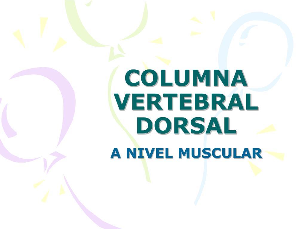 columna vertebral dorsal l.