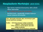 neoplazilerin morfolojisi acs 02332