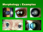 morphology examples