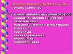 neoplasias benignas y malignas de la mama19