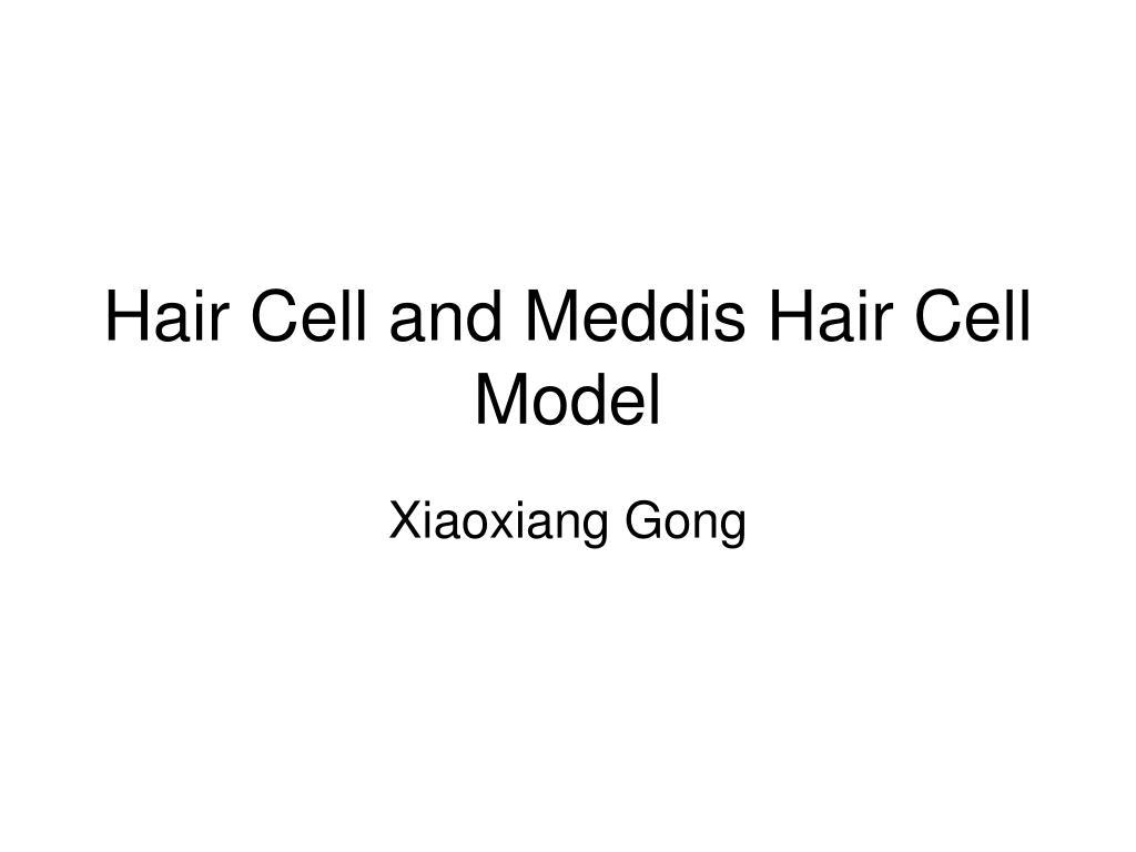 hair cell and meddis hair cell model l.