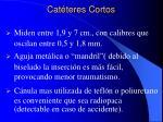 cat teres cortos9