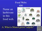 food webs 400