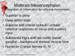 midbrain mesencephalon integration of information for reflexive movements
