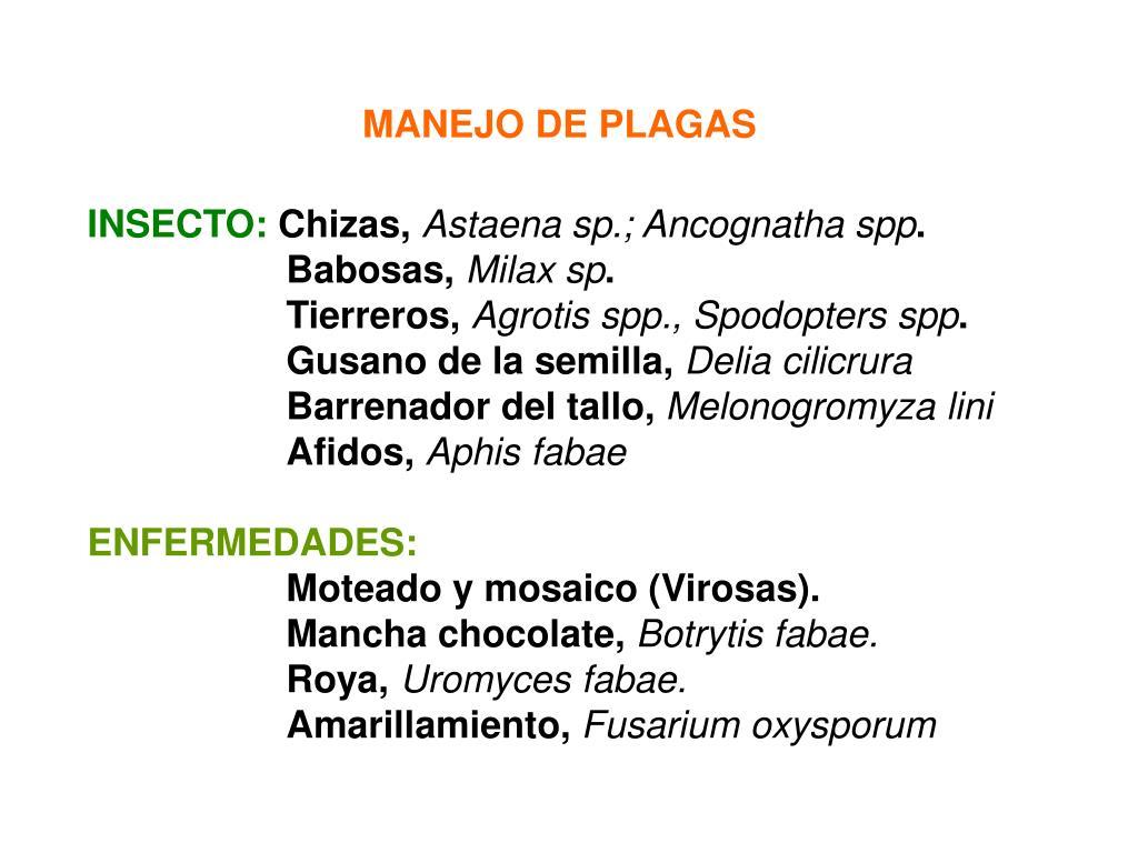 MANEJO DE PLAGAS
