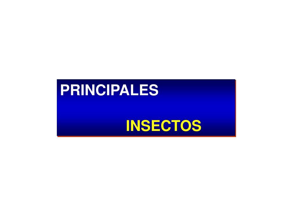 PRINCIPALES