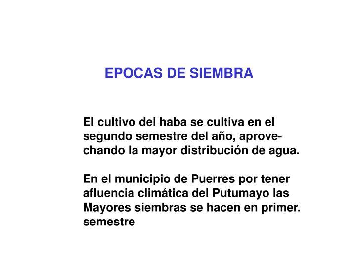 EPOCAS DE SIEMBRA
