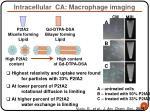 intracellular ca macrophage imaging31