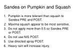 sandea on pumpkin and squash