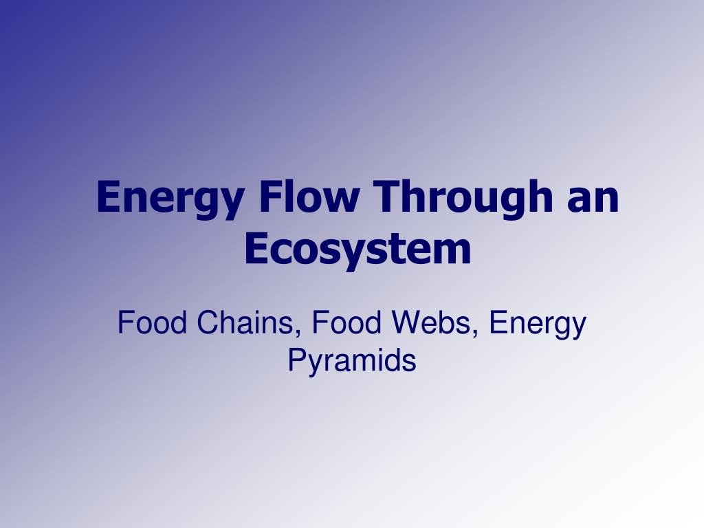 energy flow through an ecosystem l.