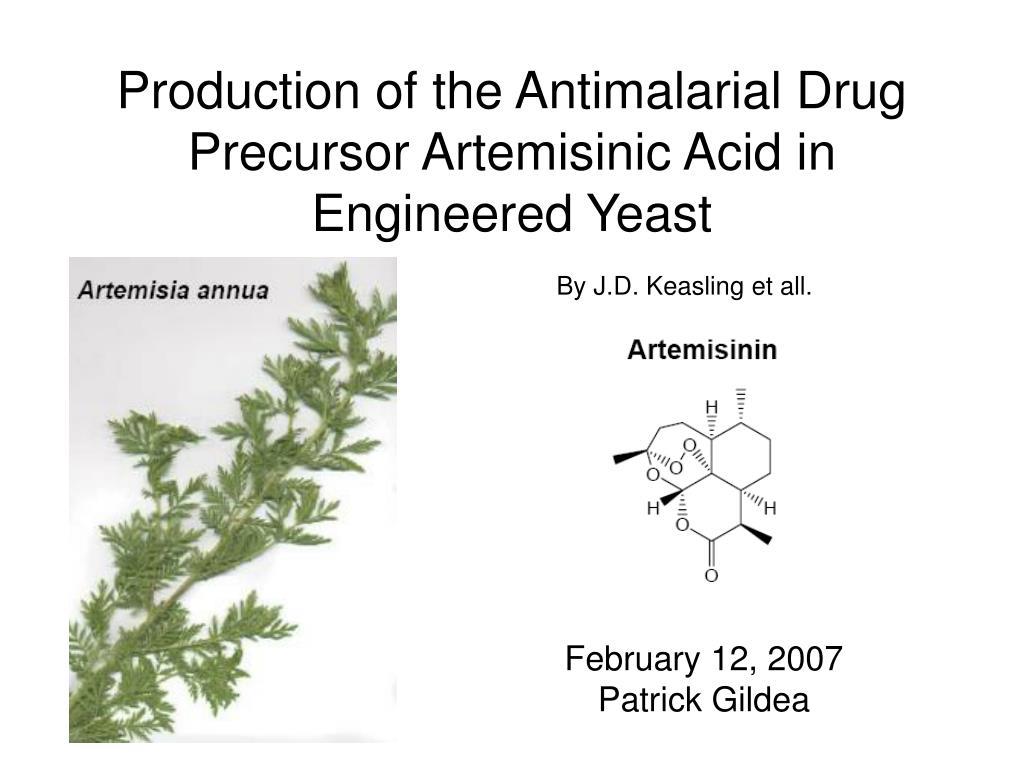 production of the antimalarial drug precursor artemisinic acid in engineered yeast l.