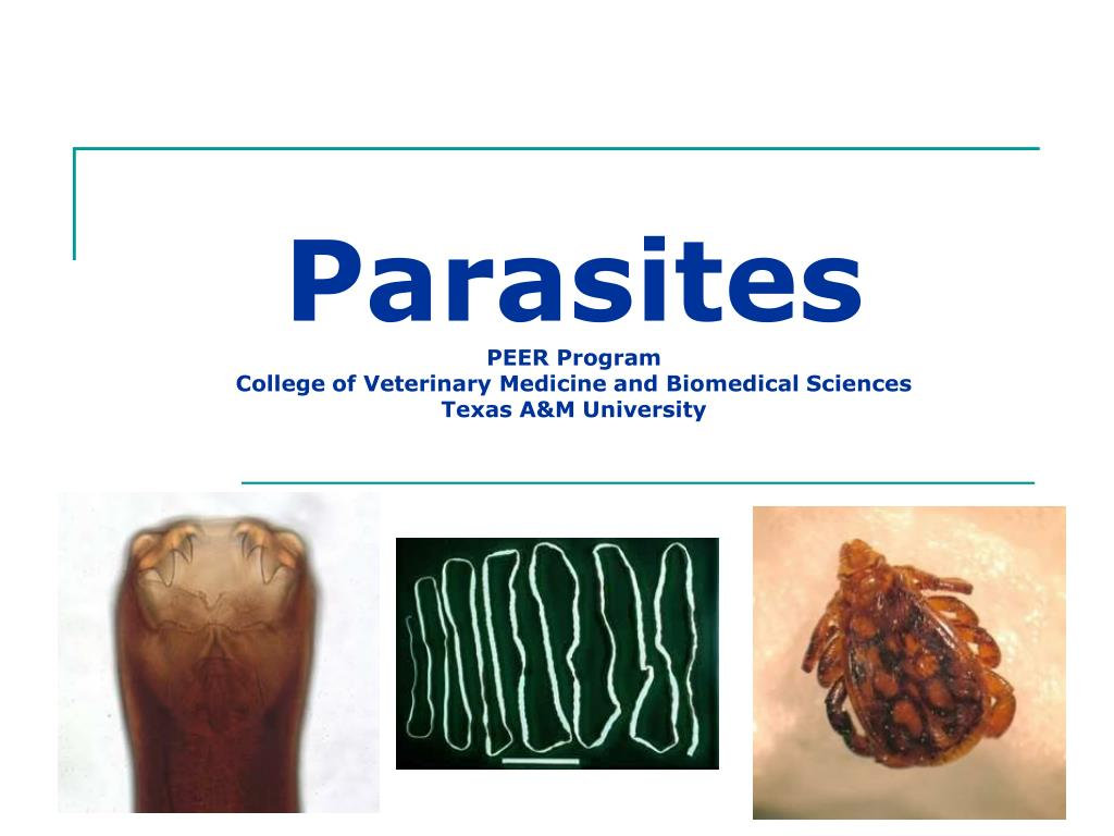 parasites peer program college of veterinary medicine and biomedical sciences texas a m university l.