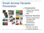 small animal parasite prevention