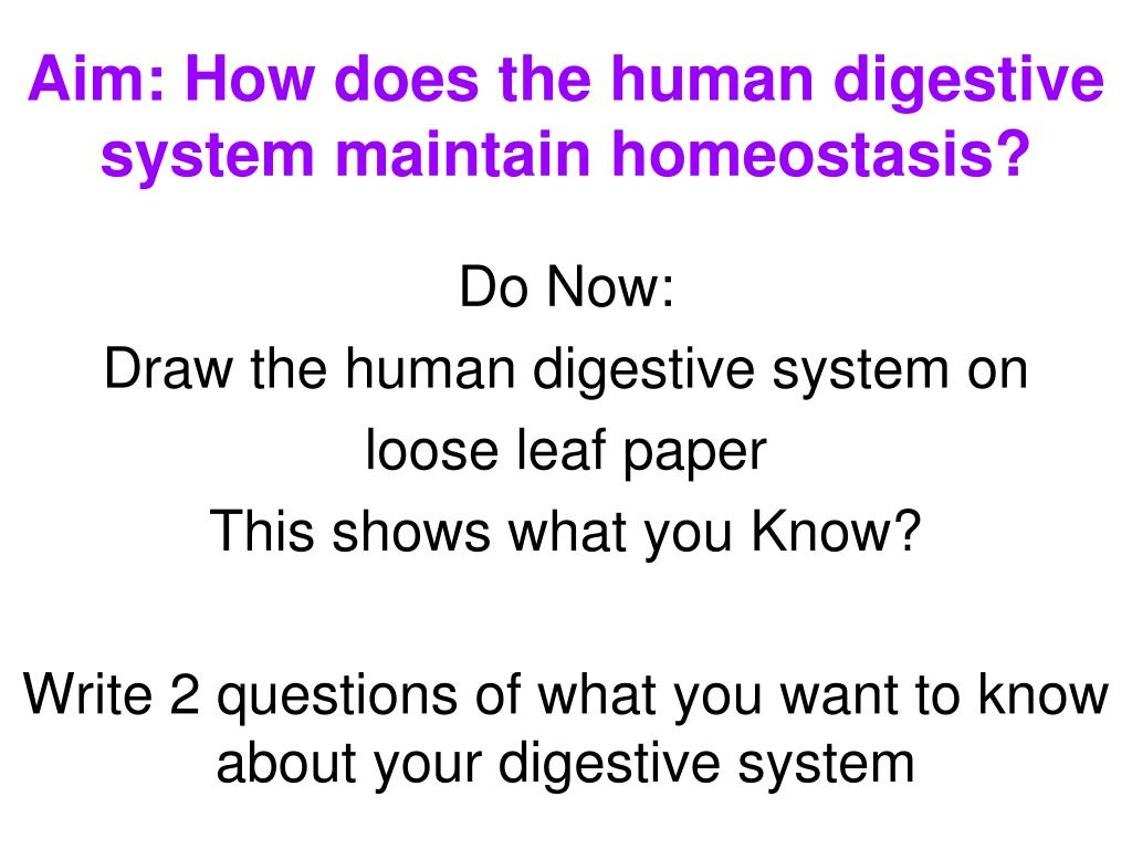 aim how does the human digestive system maintain homeostasis l.