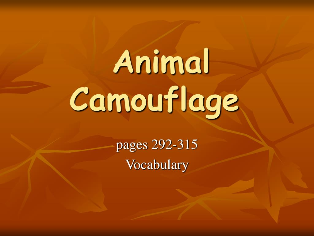 animal camouflage l.