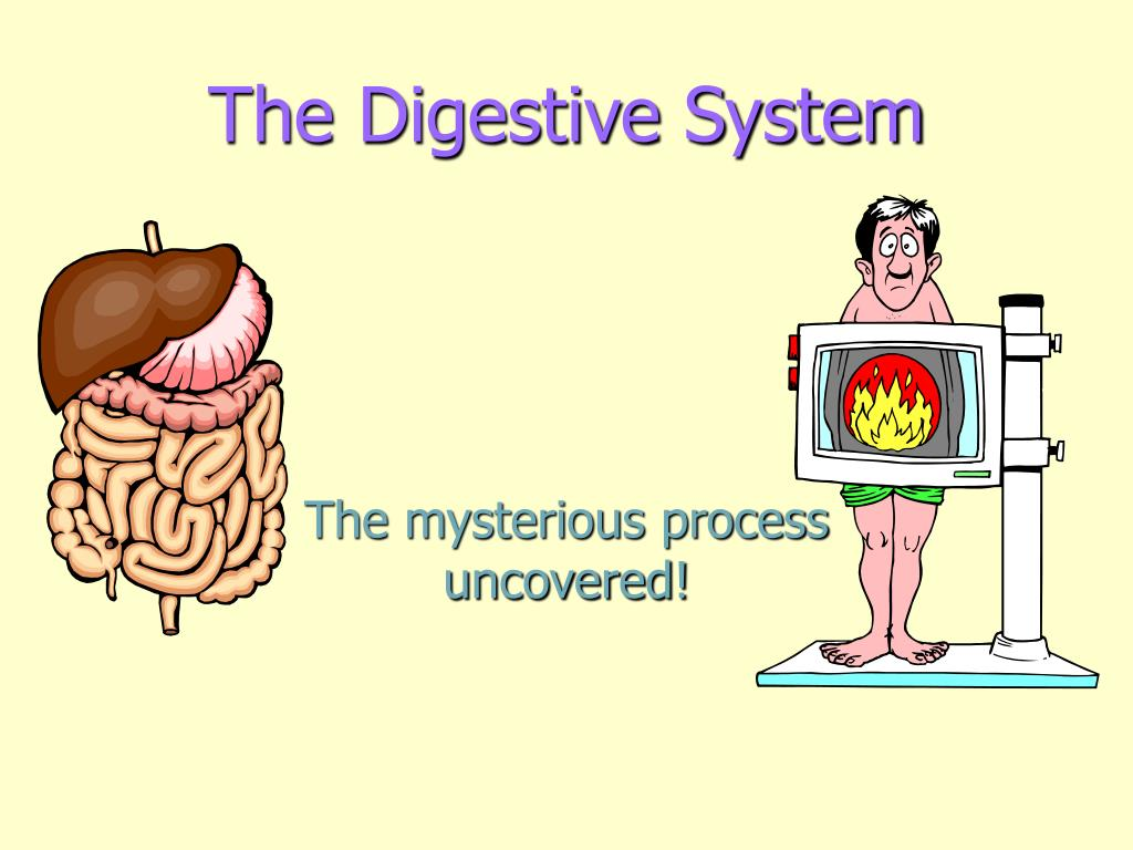 the digestive system l.