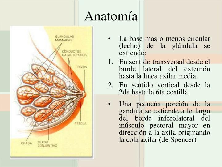 PPT - Patología Benigna de Mama PowerPoint Presentation - ID:709751