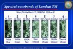 spectral wavebands of landsat tm
