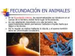 fecundaci n en animales10