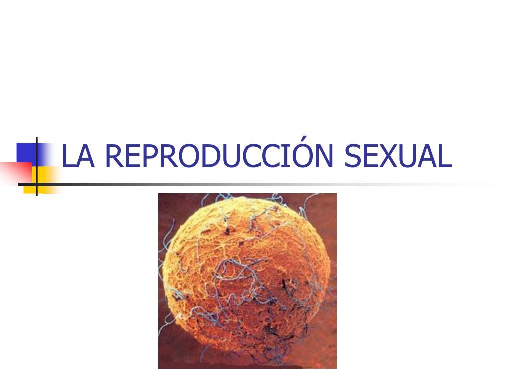 la reproducci n sexual l.
