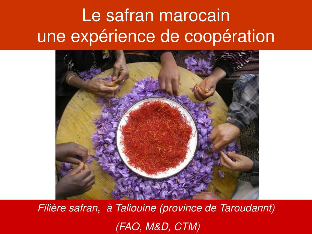 le safran marocain une exp rience de coop ration l.