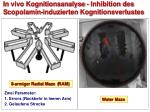 in vivo kognitionsanalyse inhibition des s copolamin induzierten kognitionsverlustes
