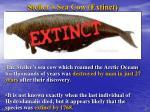 steller s sea cow extinct3