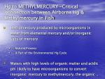 hg to methylmercury critical connection between airborne hg methylmercury in fish