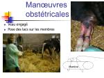 man uvres obst tricales