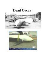 dead orcas