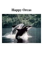 happy orcas