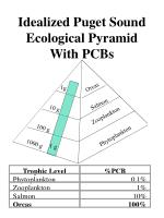 idealized puget sound ecological pyramid with pcbs
