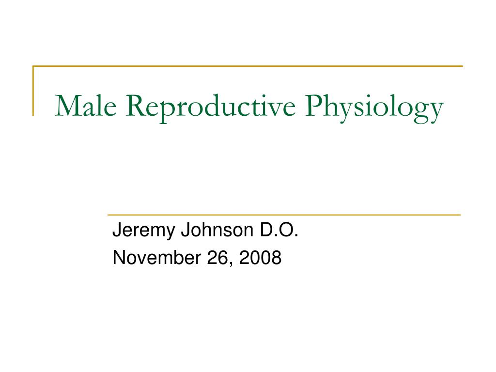 male reproductive physiology l.