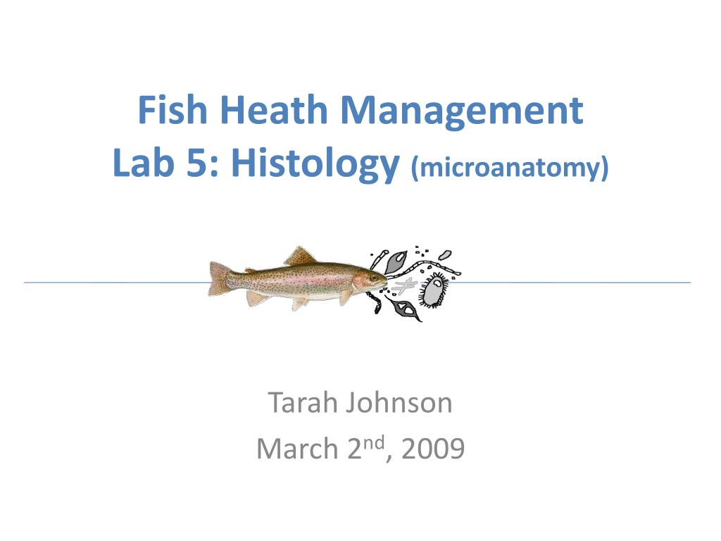 fish heath management lab 5 histology microanatomy l.
