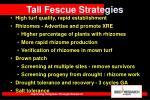 tall fescue strategies15
