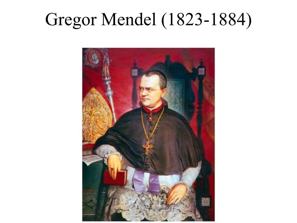 gregor mendel 1823 1884 l.