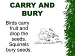 carry and bury