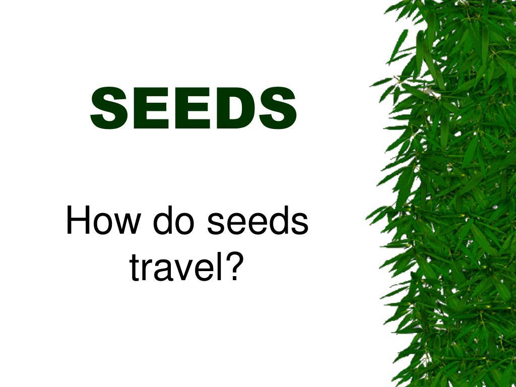 seeds l.