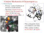 catalytic mechanism of chymotrypsin slide 1
