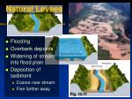 natural levees