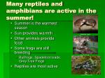many reptiles and amphibians are active in the summer