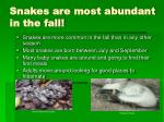 snakes are most abundant in the fall