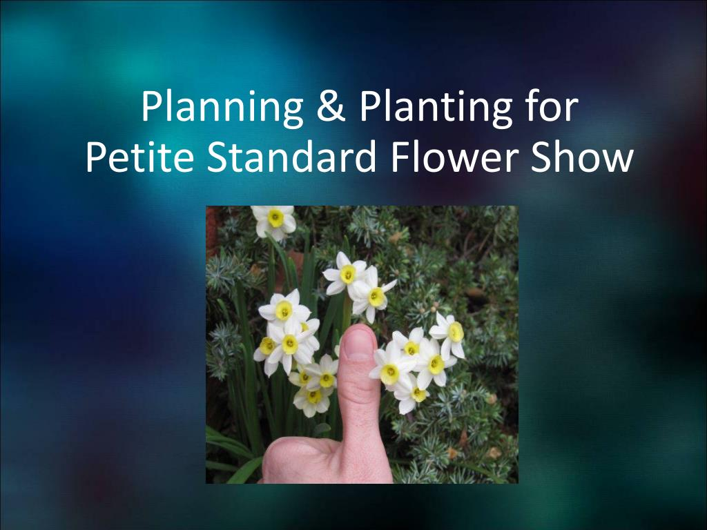 planning planting for petite standard flower show l.