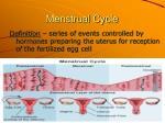 menstrual cycle3