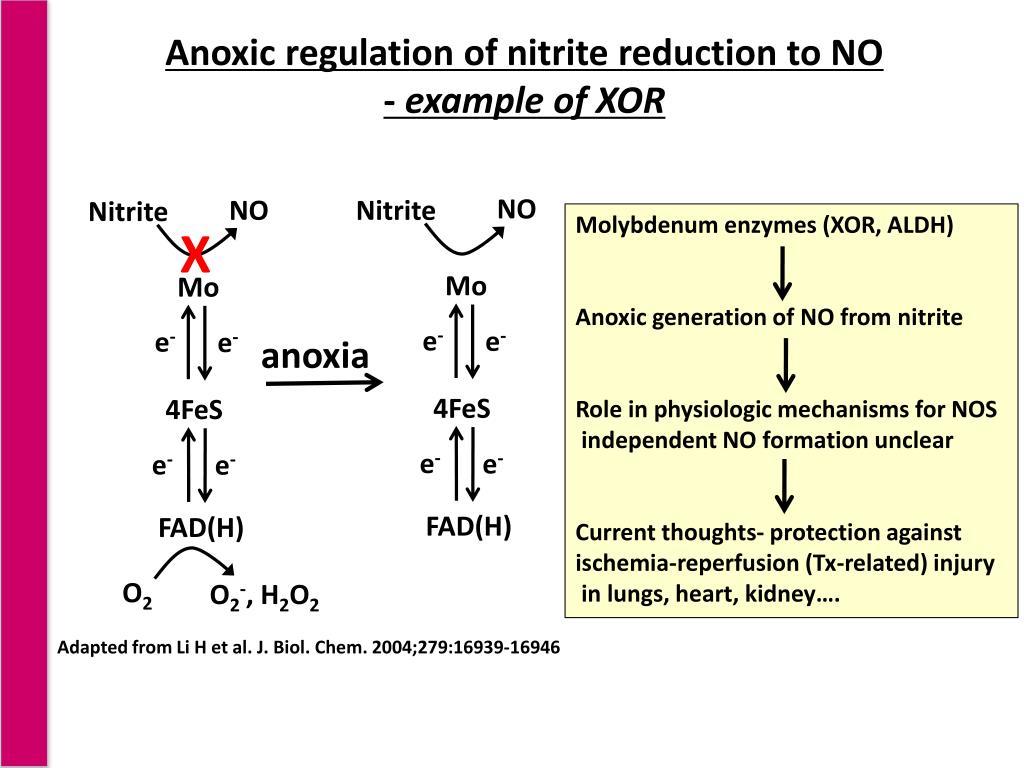 Anoxic regulation of nitrite reduction to NO