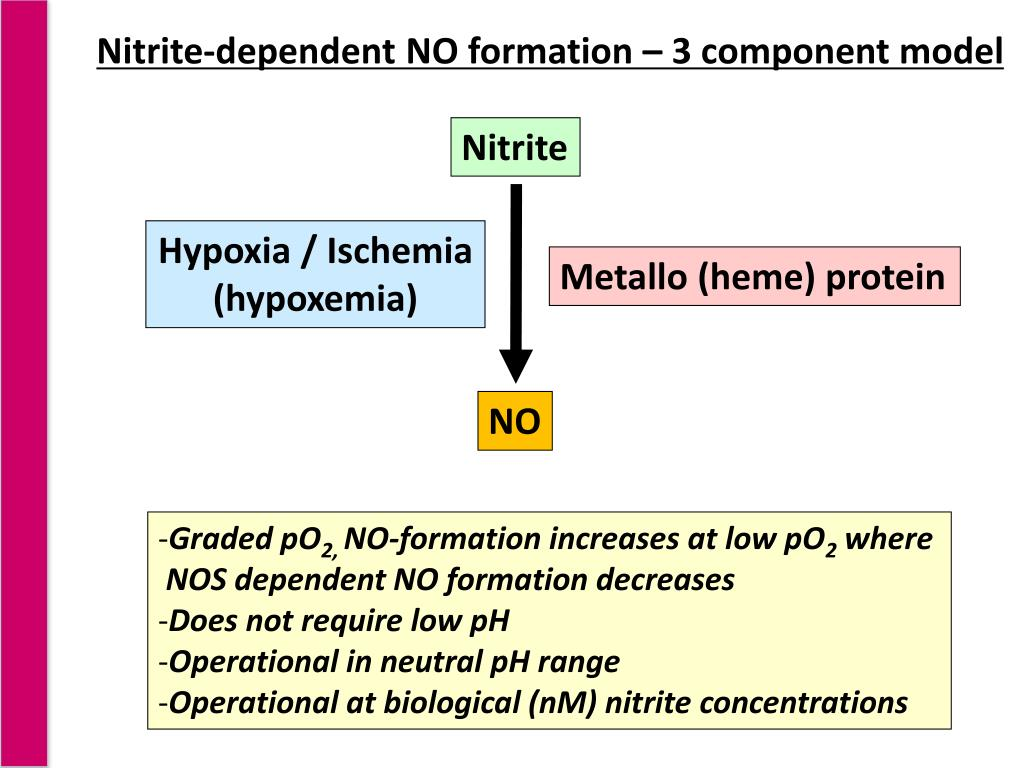 Nitrite-dependent NO formation – 3 component model